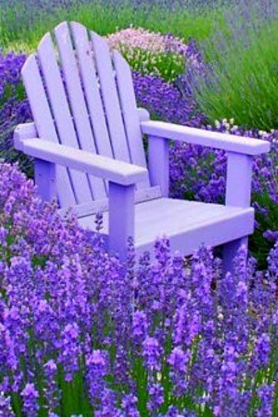 ~ lavender heaven ~