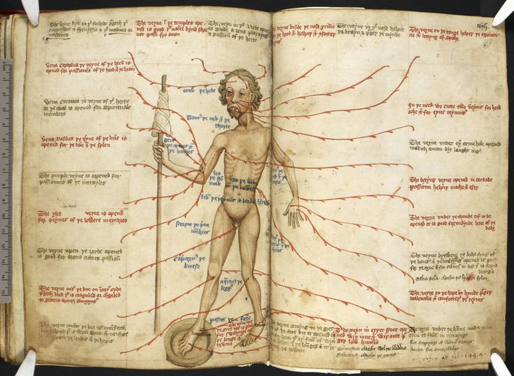 A manuscript compiling medical, astronomical, and philosophical texts of the 13th-16th centuries, Harley MS 3719 is held in the collections of the British Library. Bloodletting men, such as this illustration, were commonly found in medical texts of the late Middle Ages. They indicate where to let blood based on the patient's illness and temperment.: Open Makith, Libraries Harley, Awesome Grab, Dyes Laught, Harley Science, Man Dyes, British Libraries, Armehol Open, Diagrams Charts Illustrations