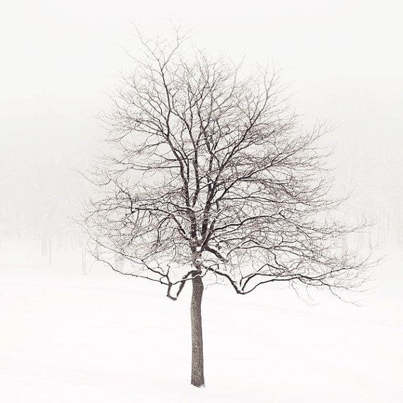 Winter Photograph Lone Tree in Snow by EyePoetryPhotography, $30.00