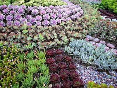 Succulent Garden Design | Garden Design Ideas - how to design a succulent garden