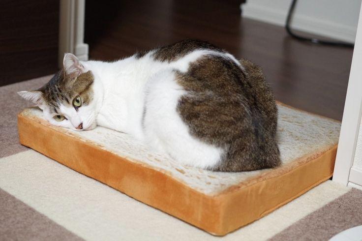 「食パンクッション」でくつろぐ猫ちゃんがかわいいと話題に