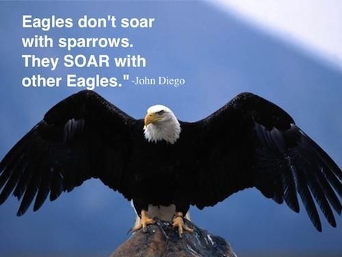 Image result for soar with eagles