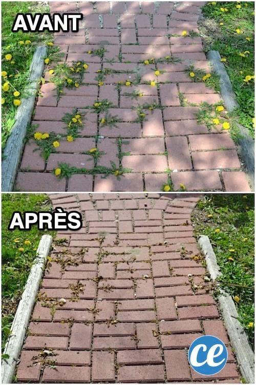 Remark Éliminer les Mauvaises Herbes Entre Les Dalles SANS EFFORT.