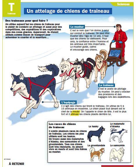 Un attelage de chiens de traîneau