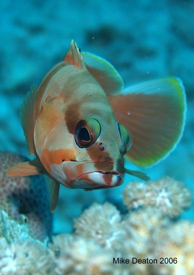 17 Best Images About Fish Water Life On Pinterest Sea