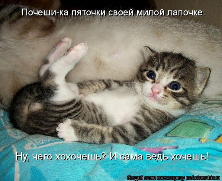 Милые котики с надписями картинки