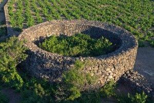 Recensione del Vino Zibibbo, il sorriso siciliano