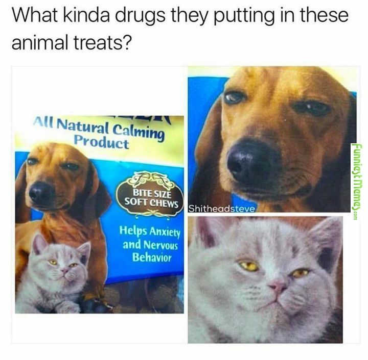 visit www.amazingdogtales.com for the best funny dog joke pics,inspirational dog stories and dog news.... Funny Memes � [Are they mixing drugs in their animal foods nowadays !!! ???]