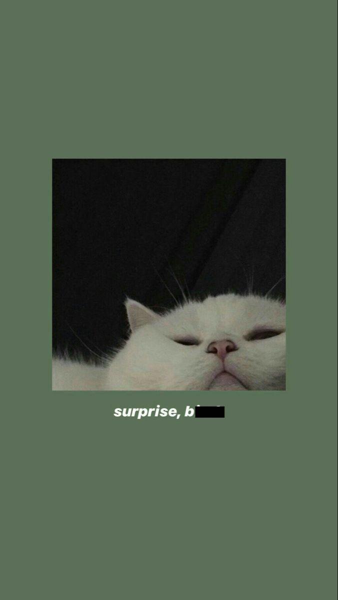 𝓢𝓾𝓹𝓻𝓲𝓼𝓮 𝓫 𝓽𝓬𝓱 Cat Wallpaper Funny Cat Wallpaper Iphone Background Wallpaper