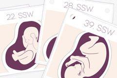 Was passiert in der 6. SSW? Ihre Hormone spielen verrückt und alle Schalter werden auf Schwangerschaft umgelegt. Lesen Sie hier, worauf Sie sich jetzt einstellen müssen! © vision net ag