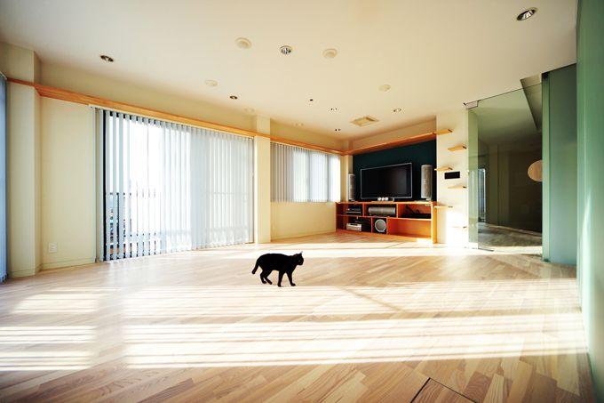 ずっと一緒、家族と猫が穏やかに暮らすための住宅特集