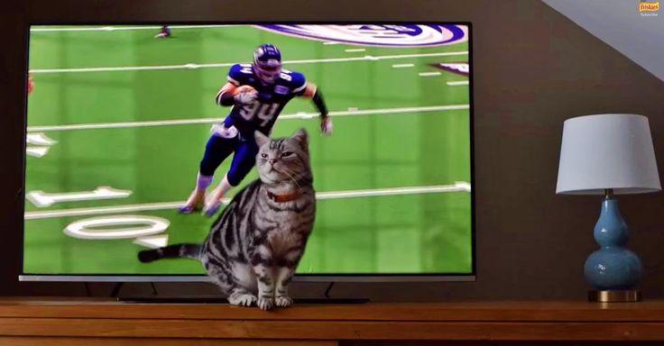 Buzzfeed Animals Purina Ad Cats