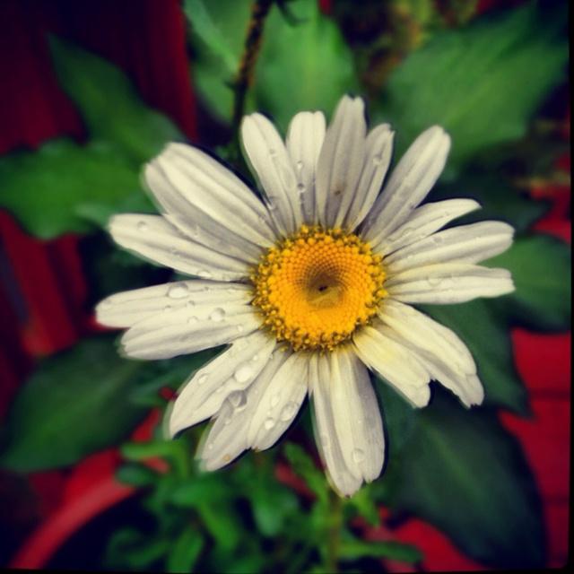 I <3 springtime!: Favorite Flowers, Time Favorite