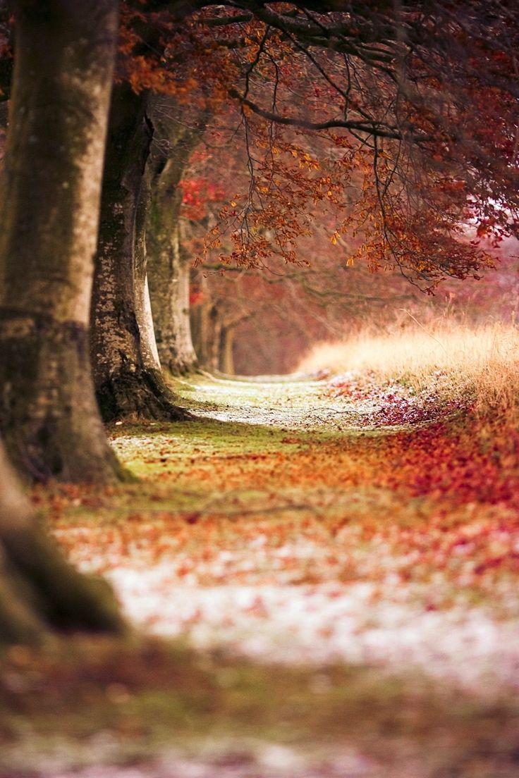 Verwunsche Wälder verzaubern im Herbst mit Braun- und Rottönen, wie auf unseren Taschen. (by ronnyb