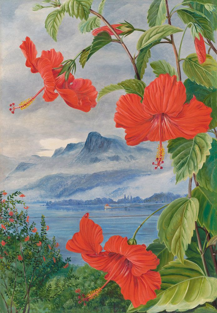 488. Mandrinette and mountain home of the Pitcher Plant in the distance Prints by Marianne North | Magnolia Box
