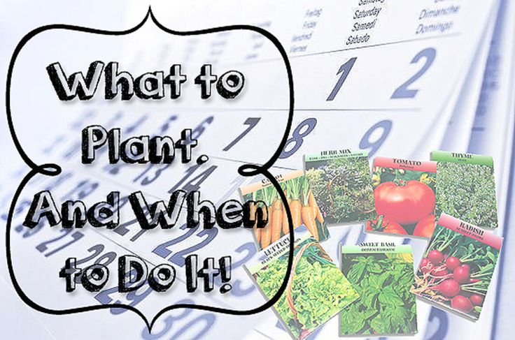 What to Plant & When to Do It http://imperfectlyhappy.com/what-to-plant-when-to-do-it/?utm_campaign=coschedule&utm_source=pinterest&utm_medium=Imperfectly%20Happy%20(Gardening)&utm_content=What%20to%20Plant%20%26%20When%20to%20Do%20It #gardening #backyardfarm #urbanhomestead #veggiegarden