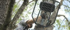 11 tips to select a treestand LOCATION