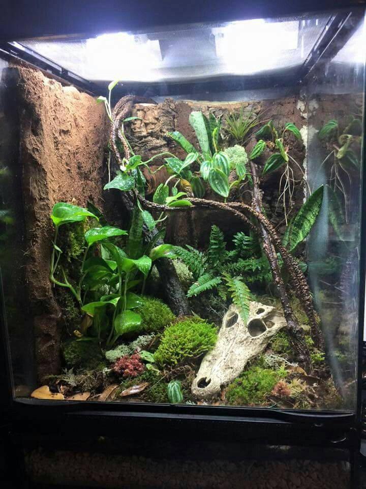 Vivarium Crested Geckos Amp Vivariums Gecko Terrarium