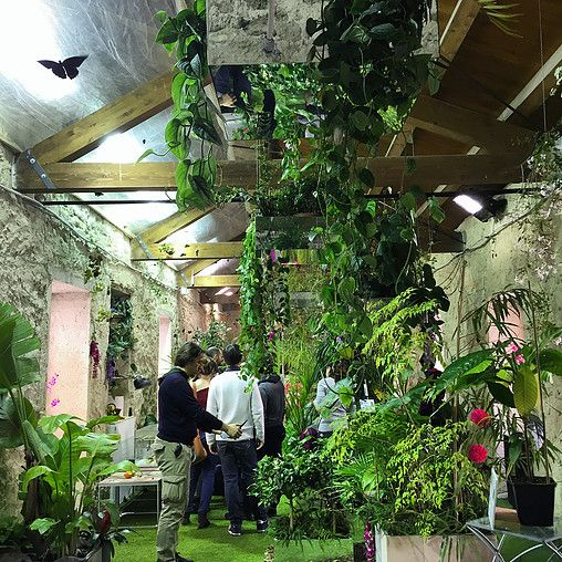 Butterfly House in Modica, Sicily | Tropical butterflies in an ex-convent | open daily from 12 March 2016 to 30 June 2016 Monday -Friday 9am-1pm and 3-7 pm Saturday, Sunday and holidays 9 am-8 pm
