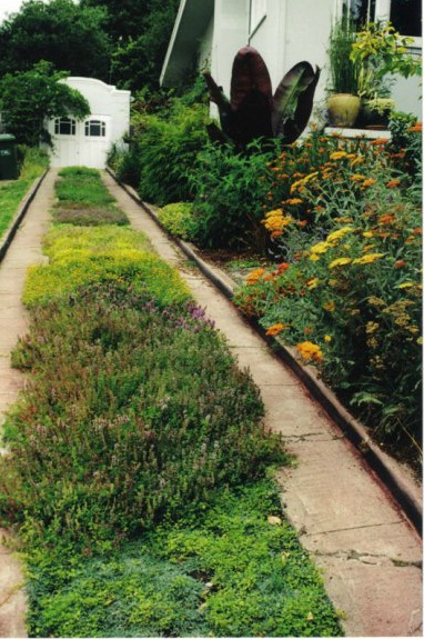 Driveway with Ground Covers (Earthly Arts)