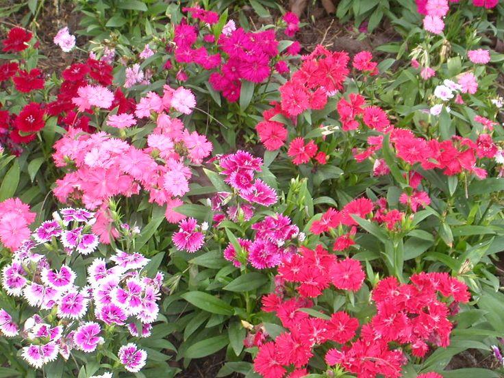 Good Outdoor Flowers For Sale Part - 4: Flower Garden .