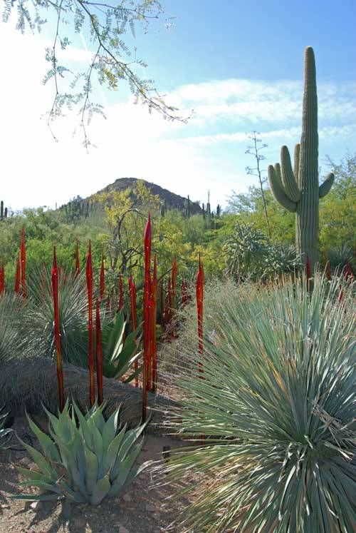 1000 images about chihuly phoenix botanical gardens on pinterest glass art sculpture and for Garden of the phoenix