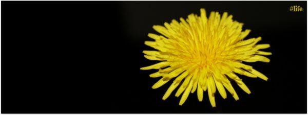 #life yellow flower