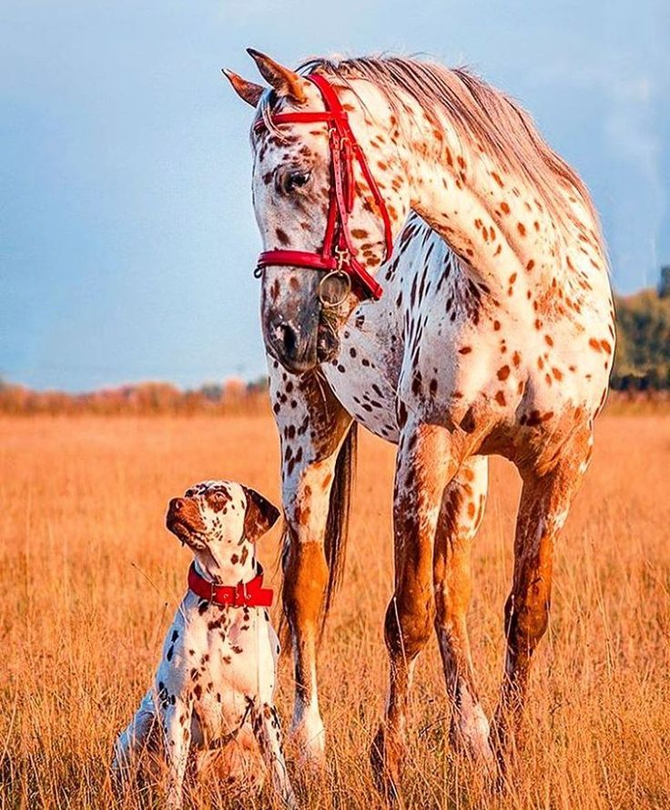 Spotty Dog & Spotty Horse: They Match! I like their brown coloring.