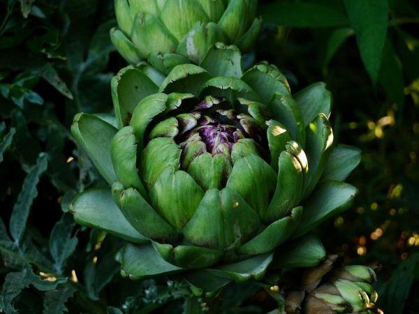 172 besten mediterrane pflanzen bilder auf pinterest mediterrane pflanzen herrlicher und lavendel. Black Bedroom Furniture Sets. Home Design Ideas
