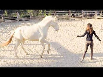 Der Moment, wenn das Halfter fällt und das Pferd neben dir trabt ist wunderschön. Wenn dein rechtes Bein gleichzeitig mit dem Bein deines Pferdes nach vorne schwingt und du mit deinem Pferd im gleichen Takt läufst. Du kannst es lernen und du kannst das mit deinem Pferd ganz einfach trainieren. Kenzie Dysli erklärt dir in unserem Trainingsvideo Schritt für Schritt, wie das geht