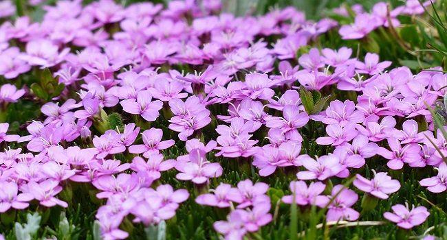 """Come distinguere i fiori commestibili e quali sono? Come li abbiniamo a tavola? Ecco una guida completa per veri """"flower-hunter""""!"""