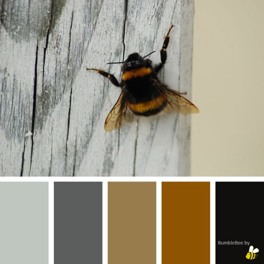 BumbleBee palette by BeeBox (ONLY FOR PERSONAL USE!)