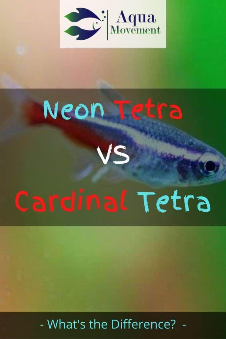 Neon Tetra Vs Cardinal Tetra A Comparison Aqua Movement Neon Tetra Neon Tetra Fish Tetra Fish