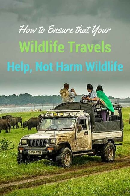 How to Ensure that Your Wildlife Travels Help, Not Harm Wildlife