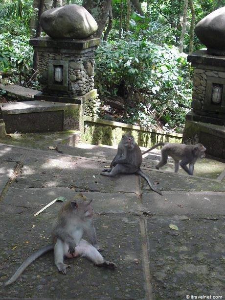 Monkey Forest, Bali (i hate monkeys after going here )