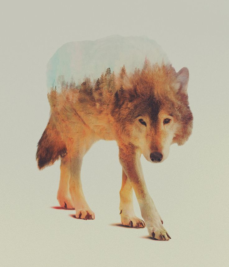 Norwegian visual artist Andreas Lie merges verdant landscapes and photographs of animals to creates subtle double exposure portraits. Via Colossal.