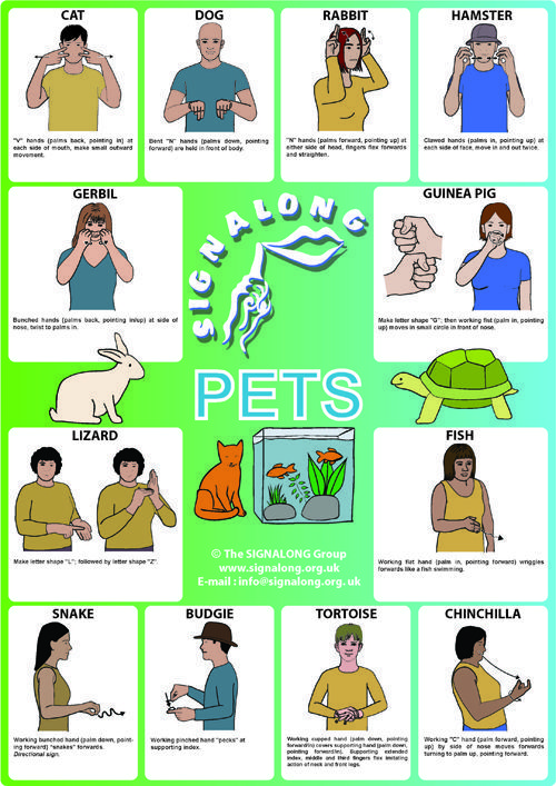 Pets signs - BSL (British Sign Language) #signlanguageposter