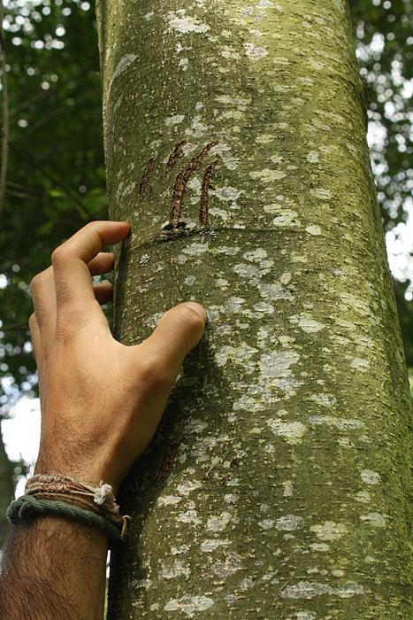 Bear claw marks with Alderleaf Wilderness College