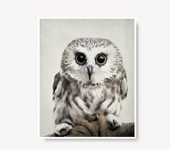 Grey owl photo cute owl print woodland animal by semisweetstudios, $18.00