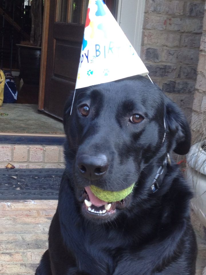 Happy birthday to me!!!! | Happy birthday dog, Dog love ...