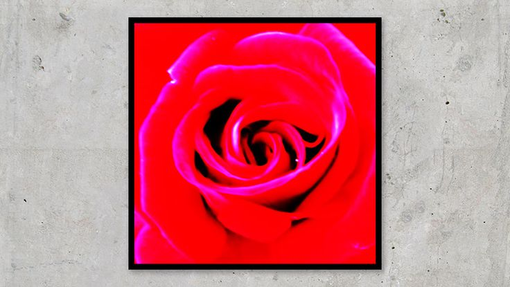 Perfect Red Rose With a Gamut Problem