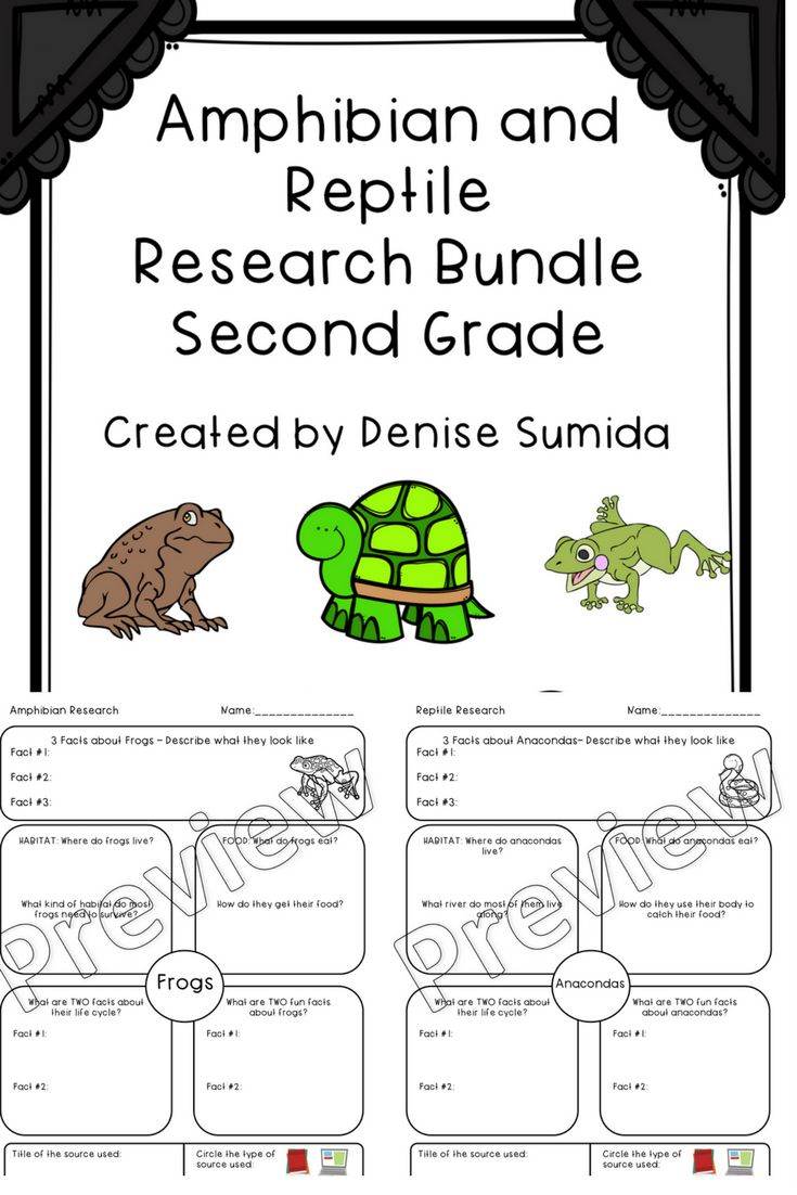 Second Grade Amphibian and Reptile Research Worksheets Bundle   Reptiles [ 1102 x 735 Pixel ]