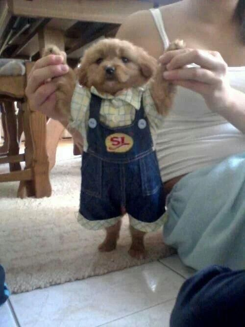 New puppy dressed up