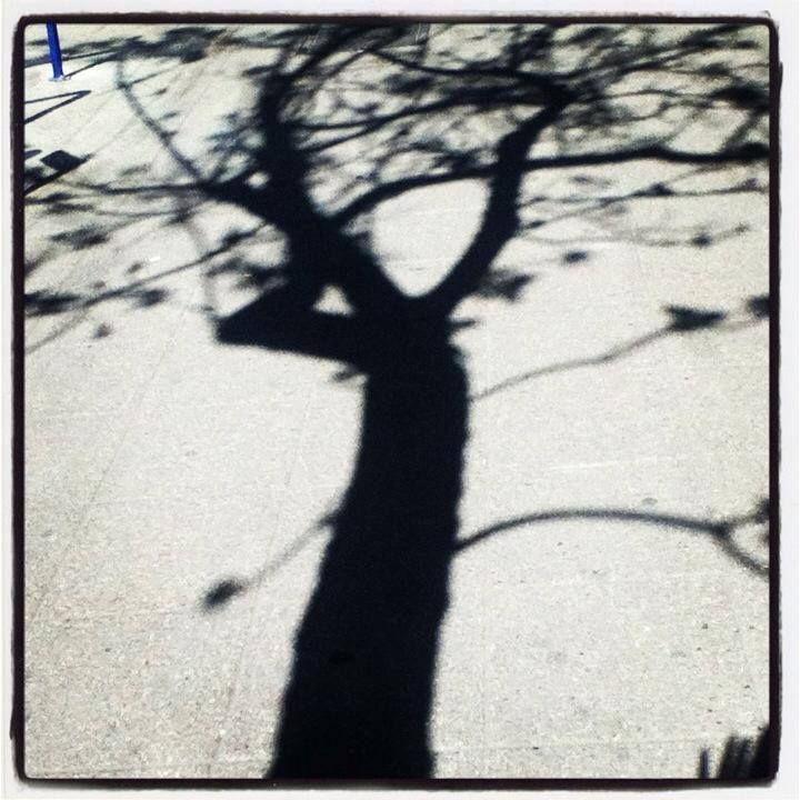 Tree shadow art by MaxAna X