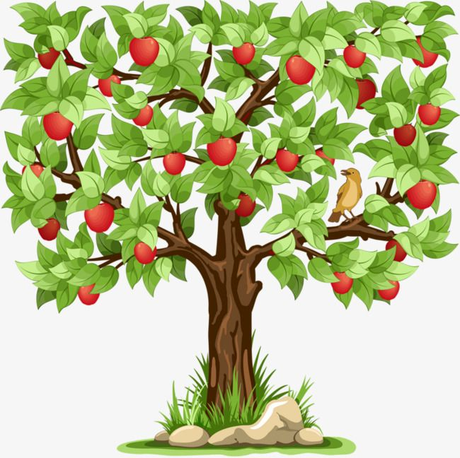 Cartoon Apple Tree Tree Clipart Cartoon Clipart Apple Png And Vector With Transparent Background For Free Download Tree Illustration Tree Art Tree Drawing Simple