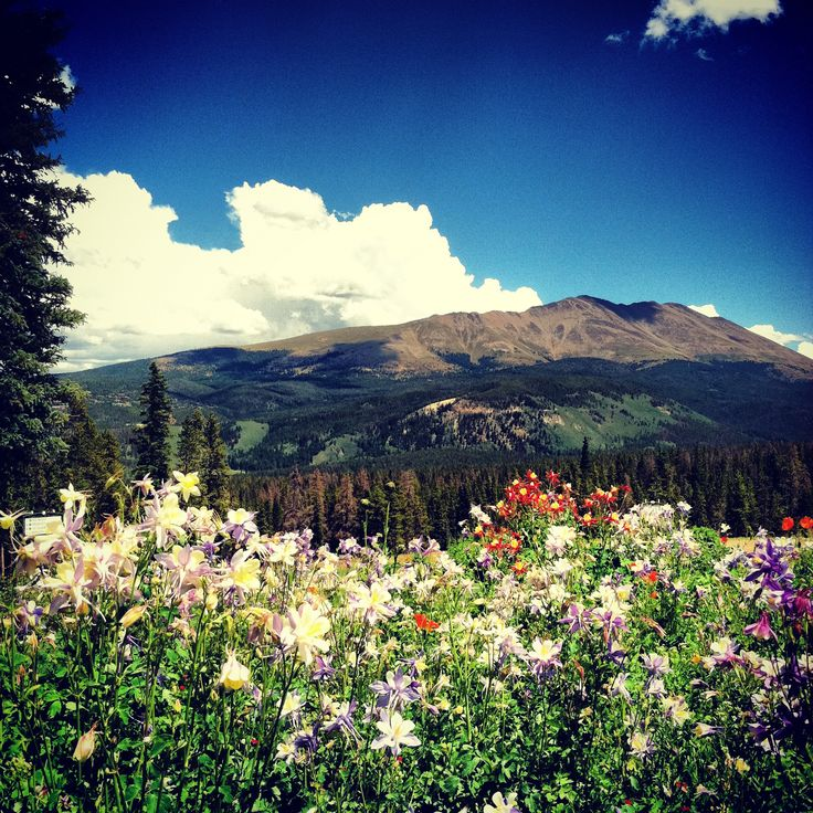 The 8 best wildflower hikes near Breck //   With all this new snow, you're going to want to read my latest article on what I think are the best wildflower hikes around Breckenridge are!  Get your gear together now, and line up your summer with these favorites of mine.