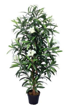 A Loja do Gato Preto | Planta Oleandro Branco 150cm @ Planta Oleander Blanca 150cm
