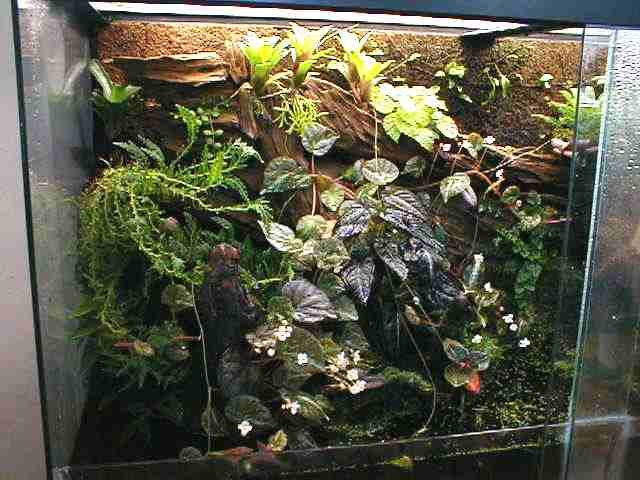 Large terrarium - Best 20+ Large Terrarium Ideas On Pinterest Water Terrarium
