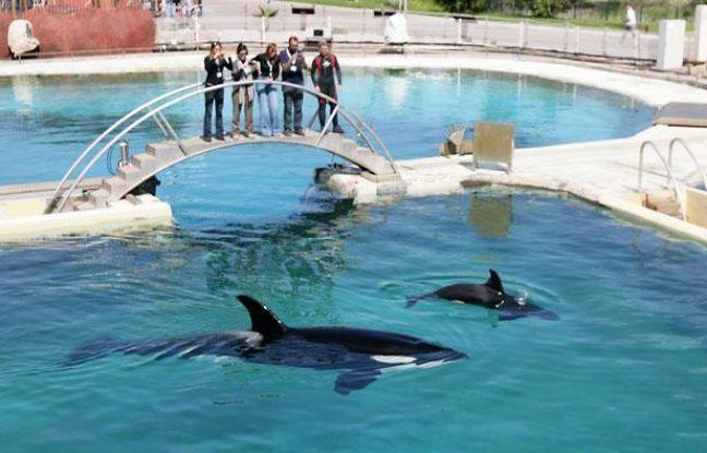 Des orques à Marineland (Archive)