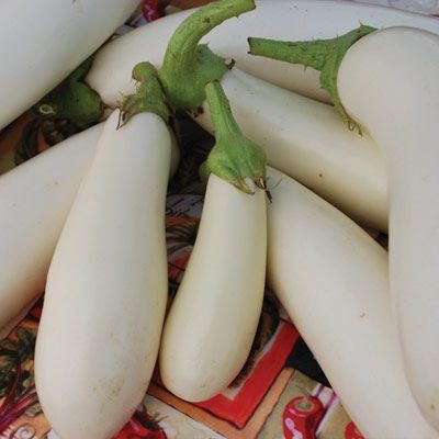 casper_eggplant_seeds